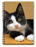 Special Delivery Tuxedo Kitten Spiral Notebook
