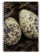 Speckled Killdeer Eggs By Jean Noren Spiral Notebook
