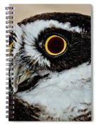 Spectacle Owl Spiral Notebook