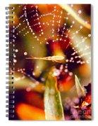Spider And Spider Web Spiral Notebook