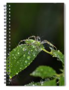 Spider And The Shower Spiral Notebook