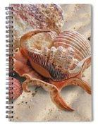 Spider Conch Shell On The Beach Spiral Notebook