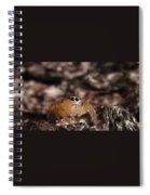 Spider Eyes Spiral Notebook