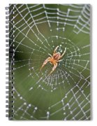 Spider In A Dew Covered Web Spiral Notebook