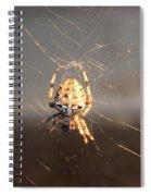 Spider In Wait Spiral Notebook