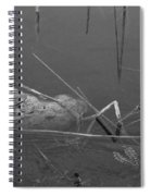 Spider In Water Spiral Notebook