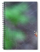 Spider In Web Spiral Notebook
