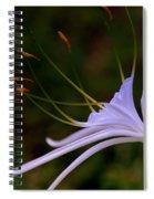Spider Lilly Blue Spiral Notebook