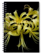 Spider Lily Spiral Notebook