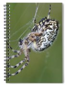 Spider Spiral Notebook