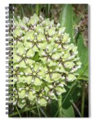 Spider Milkweed - Antelope Horns Spiral Notebook