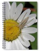 Spider On Daisy Spiral Notebook