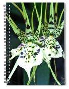 Spider Orchid Brassia Spiral Notebook