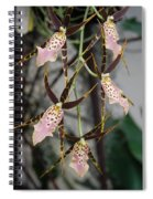 Spider Orchids Spiral Notebook