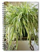 Spider Plant Spiral Notebook