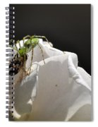 Spider Vs Bee On Rose Spiral Notebook