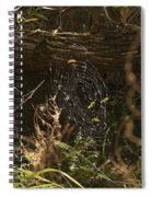 Spiders Web In Sunlight In Peters Canyon Spiral Notebook