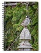 Spiffy Sparrow Spiral Notebook
