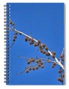 Spike Ball Tree Spiral Notebook