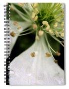 Spindly Stamen Spiral Notebook