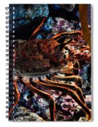 Spiney California Lobster Spiral Notebook
