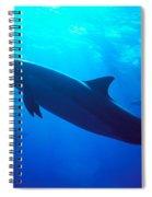 Spinner Dolphin Spiral Notebook