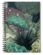 Spiny Spiral Notebook