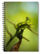 Spiny Oak Slug Moth 2 Spiral Notebook