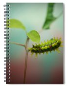 Spiny Oak Slug Moth 3 Spiral Notebook
