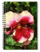 Splash Cerise Spiral Notebook