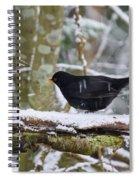Splash. Eurasian Blackbird Spiral Notebook