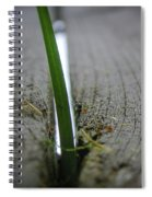 Split The Difference Spiral Notebook