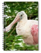 Spoonbill Spiral Notebook