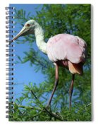 Spoonbill In A Tree Spiral Notebook