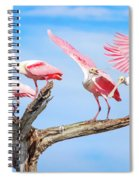 Spoonbill Party Spiral Notebook