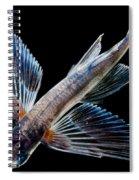 Spotfin Flyingfish Spiral Notebook