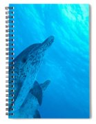 Spotted Dolphins Spiral Notebook
