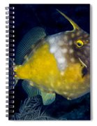 Spotted Filefish Spiral Notebook