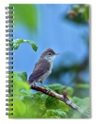 Spotted Flycatcher Muscicapa Striata .  Spiral Notebook