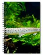 Spotted Gar Aquarium Fishes Pair Spiral Notebook