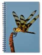 Spotted Hunter Spiral Notebook