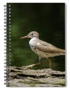 Spotted Sandpiper Spiral Notebook