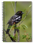 Spotted Towhee Spiral Notebook