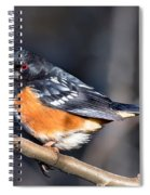 Spotted Towhee Portrait Spiral Notebook
