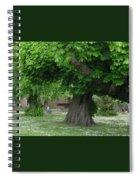 Spreading Chestnut Tree Spiral Notebook