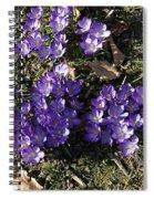Spring 3 Spiral Notebook