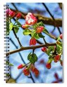 Spring Awakening 3 - Paint Spiral Notebook