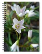 Spring Beauties Spiral Notebook