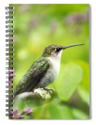 Spring Beauty Hummingbird Square Spiral Notebook