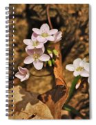 Spring Beauty Spiral Notebook